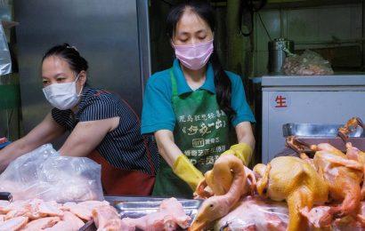 WHO downplays danger of coronavirus latching on to food packaging