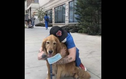 Therapy dog named Buddy Gill is spreading joy across the streets of New York. Watch