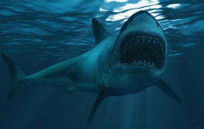 Surfer saved after friend punches shark in Australian attack