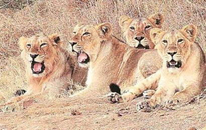 Centre to launch Project Lion, Dolphin