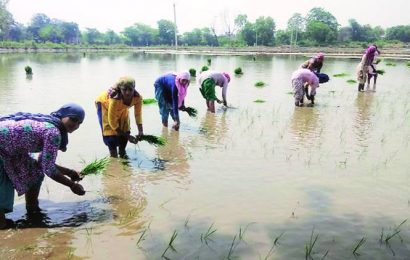 Worst seems to be over, farm sector to cushion pandemic impact on economy: Finance Ministry