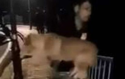 Man throws dog into lake in Bhopal, then smiles for video; case filed