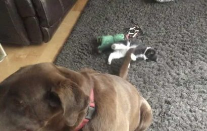 Dog and cat siblings' hang out session makes for the cutest watch