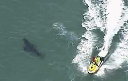 Shark kills surfer on Australia's Gold Coast tourist strip