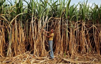 Govt. may extend soft loans to grain-based distilleries to boost ethanol production