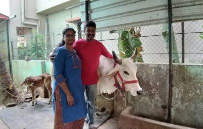 Meet an IT couple in Chennai running a dairy farm from their garage