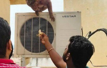 Man rescues injured monkey