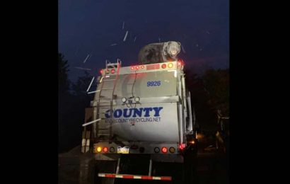 Bear hitches a ride on garbage truck in Pennsylvania, later rescued