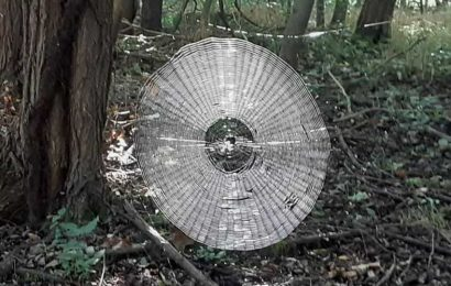 Huge spiderweb found in Missouri, US spooks netizens. Beautiful but scary, they say
