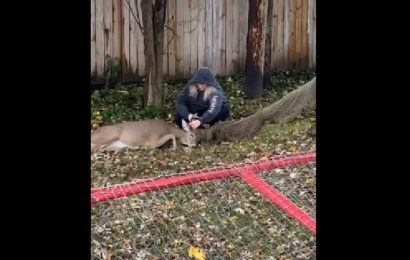 Woman saves deer trapped in hammock, incredible video wins people over