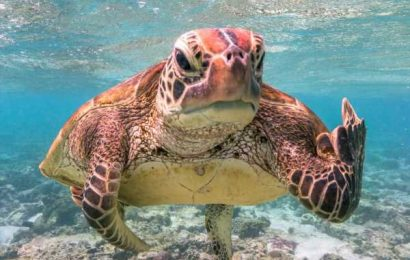 Turtle with an attitude problem is 2020's funniest wildlife photo