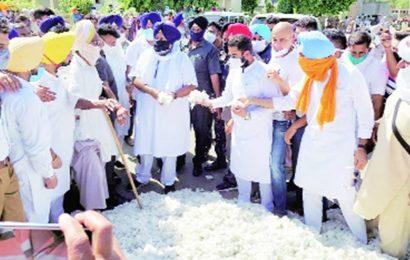 Sukhbir visits Fazilka cotton mandi: 'Centre declares price, but purchase happens below MSP'