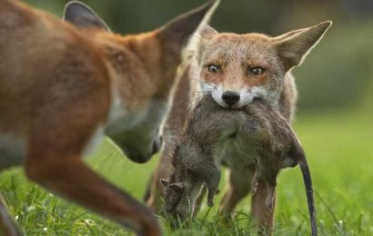 Wildlife Photographer of the Year 2020 — first pictures released