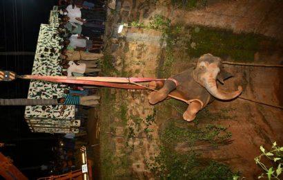 Watch | Wild female elephant rescued from well in Dharmapuri