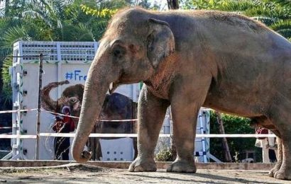 World's 'loneliest elephant' heads to Cambodia from Pak.