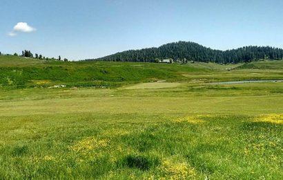 Himachal Pradesh: Area around Nargu sanctuary to be declared eco-sensitive zone