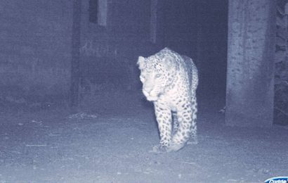 Gujarat: Forest dept steps up efforts to trap leopard sighted in Hazira