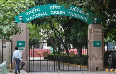 NGT directs Odisha to submit action plan on strengthening elephant corridors