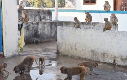 Telangana launches first rescue, rehabilitation centre for monkeys