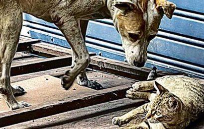 Delhiwale: It's a dog-love-cat world