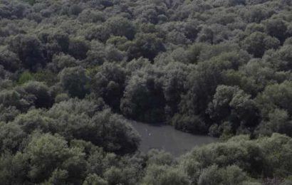 Alarm raised over systematic destruction of mangroves in Maharashtra for land grab