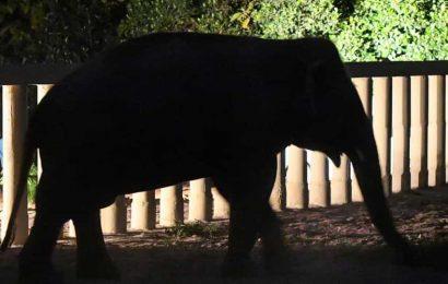 Third elephant radio-collared in Uttarakhand