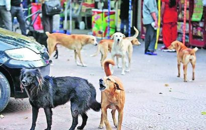 Rising stray population: BMC to hire seven vans, dog catchers for sterilisation, anti-rabies scheme