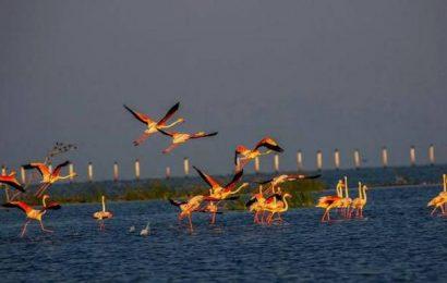 Odisha on tenterhooks as threat of bird flu looms large