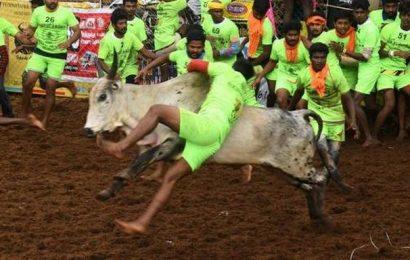 Jallikattu begins at Palamedu in Madurai, amidst COVID-19 restrictions