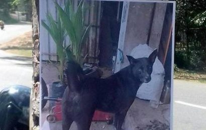 Traders mourn passing of a street dog