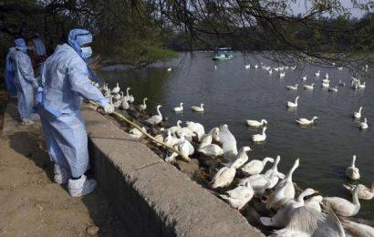 Bird flu confirmed in owl found dead in Delhi zoo