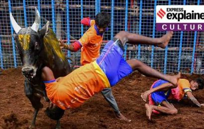 Explained: As Jallikattu begins, recalling the cultural argument for an ancient tradition