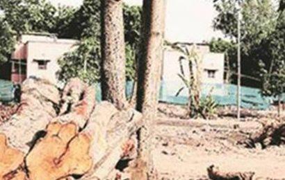 Karnataka HC restrains felling of trees in Bengaluru park for MiG aircraft installation