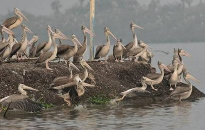 Rare bird species sighted in wetlands