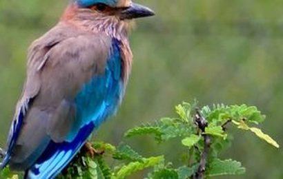The colourful birds of Madurai