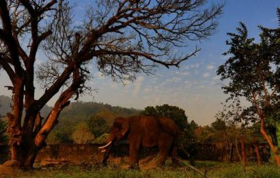 Elephant deaths rise to seven in Odisha sanctuary