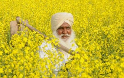 Punjab Cabinet approves mission 'Lal Lakir' in all villages