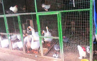 Delhi zoo samples positive for bird flu
