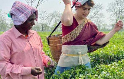 SEE: Priyanka Gandhi tries hand at plucking tea leaves in Assam