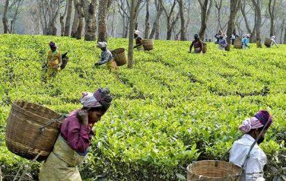 Assam body calls for shutdown of tea estates across State on March 22
