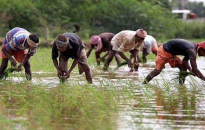 A climate-resilient rainfed agriculture