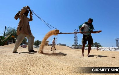 Labour shortage blamed for slow lifting of wheat from mandis