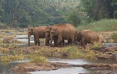 Wild elephants spotted in Mandekolu village
