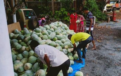 Ash gourd farmer in Karnataka gets helping hand from down under