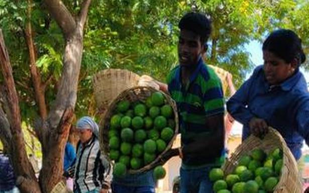 COVID-driven demand pushes up sweet lime prices