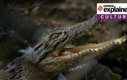 Explained: The science and myth behind crocodile's tears