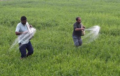 Government enhances DAP fertiliser subsidy