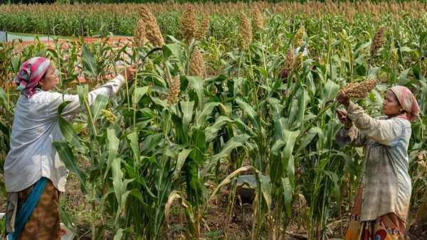Tech driven farming still remains a pipedream