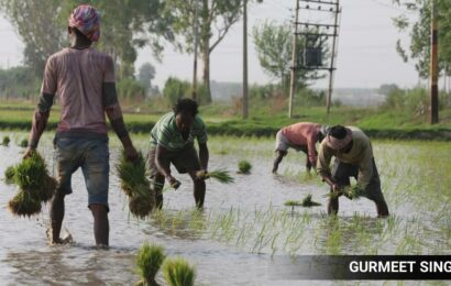 'Don't vote for the BJP': Punjab farmers tell migrants who have come to work in their paddy fields