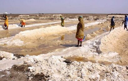 Left behind by salt-pan workers, 25 dogs rescued from Little Rann of Kutch